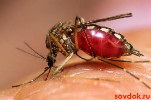 комар-переносчик