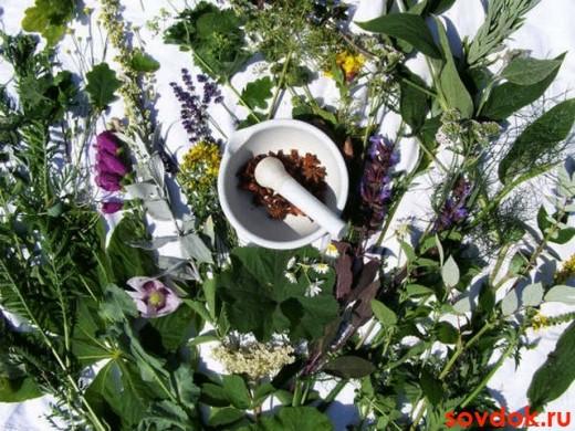 лечение растительными препаратами