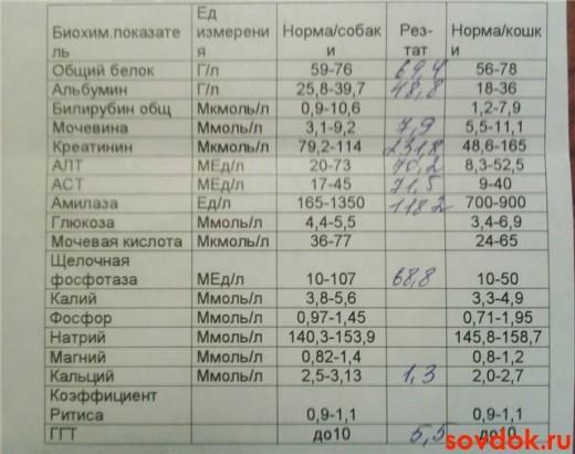 мочевина в биохимическом анализе крови