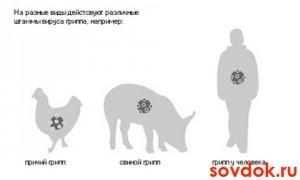 разные штаммы вируса гриппа