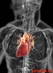 сердце и аритмия