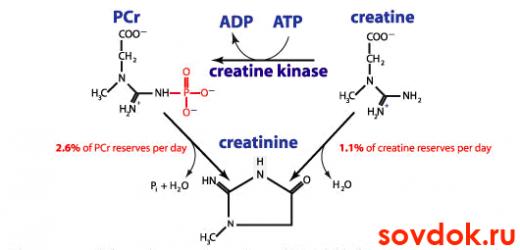 схема метаболизма креатинина