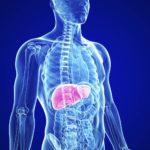 Метадоксил и алкогольный цирроз печени