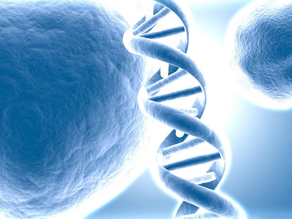 В поисках гена долголетия