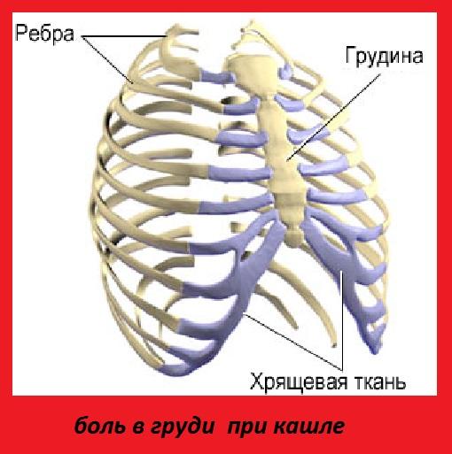 Почему болит кость между грудями 86