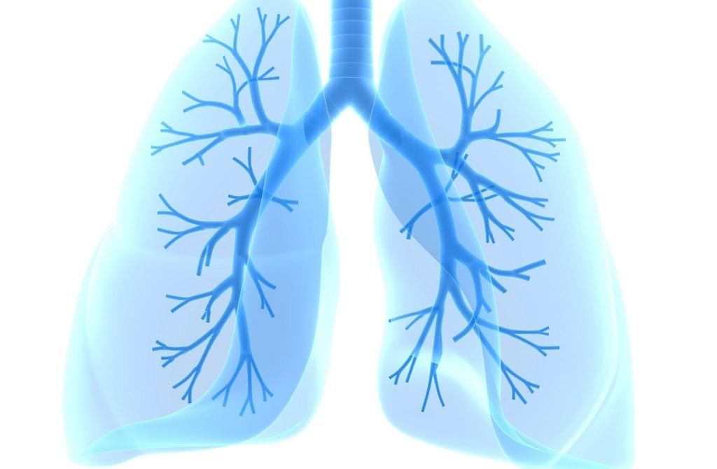 Хроническая  обструктивная  болезнь  лёгких: антибактериальная  терапия