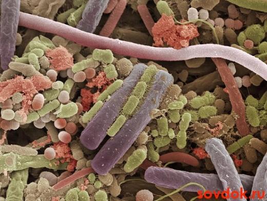 Бактерии на человеческом языке