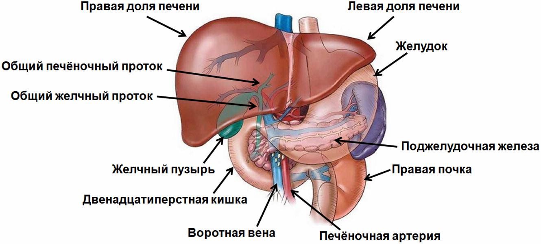 Лечение острого хронического гепатита с