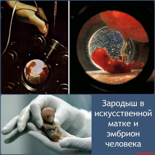зародыш в искусственной матке и эмбрион человека