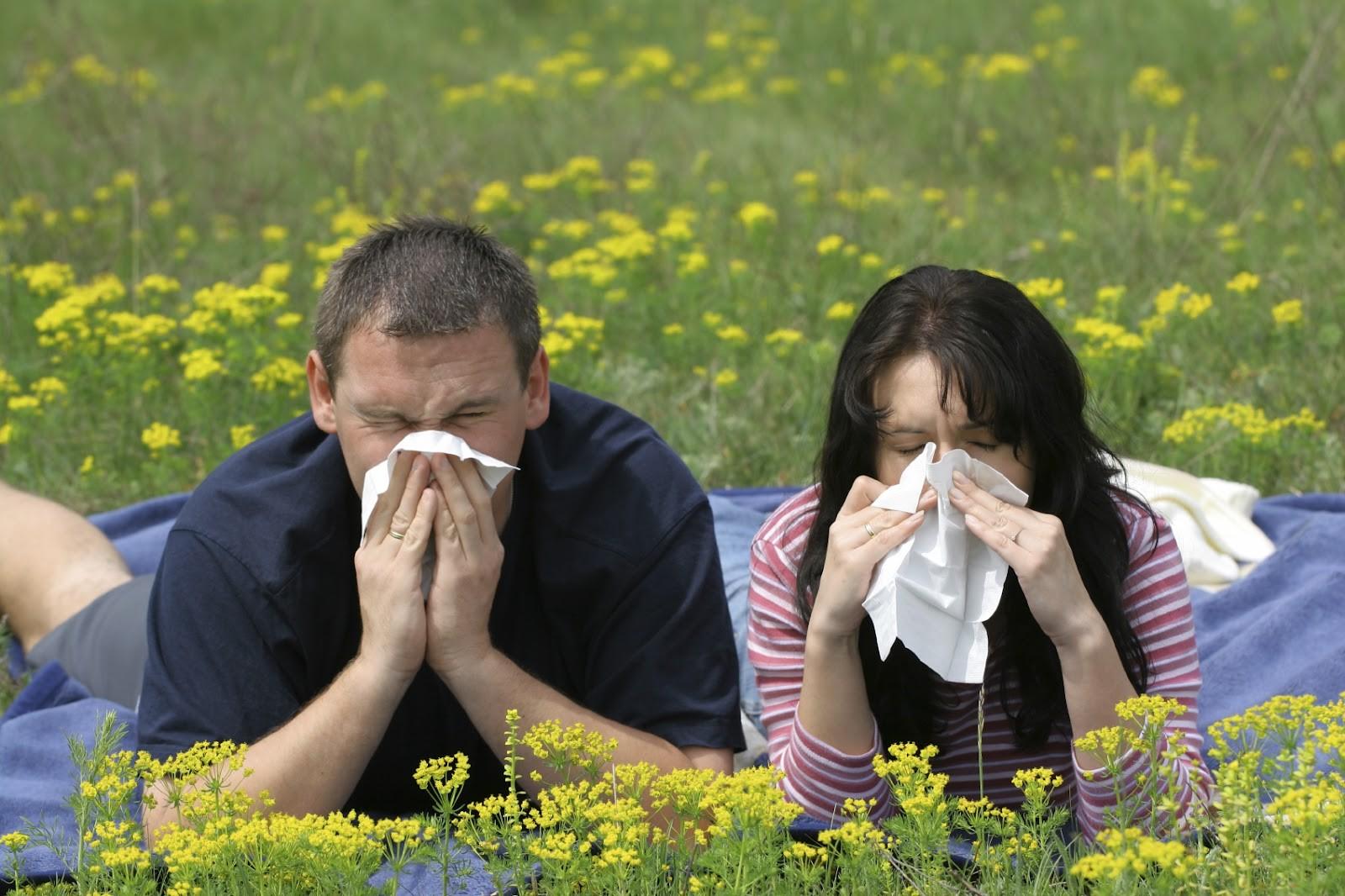 Что такое сенная лихорадка?