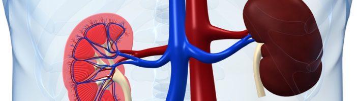 Острый гломерулонефрит: причины, проявления и методы лечения