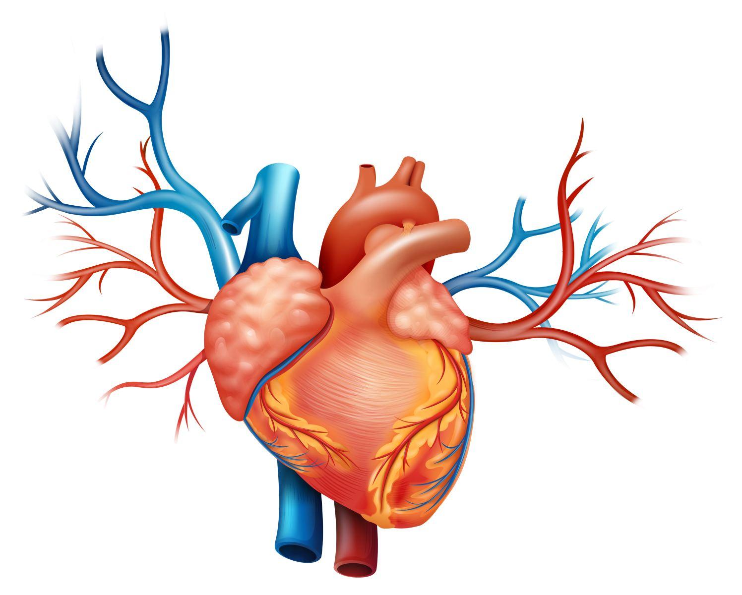 Патогенез,  клиника   и  лечение  правожелудочковой  хронической  сердечной  недостаточности