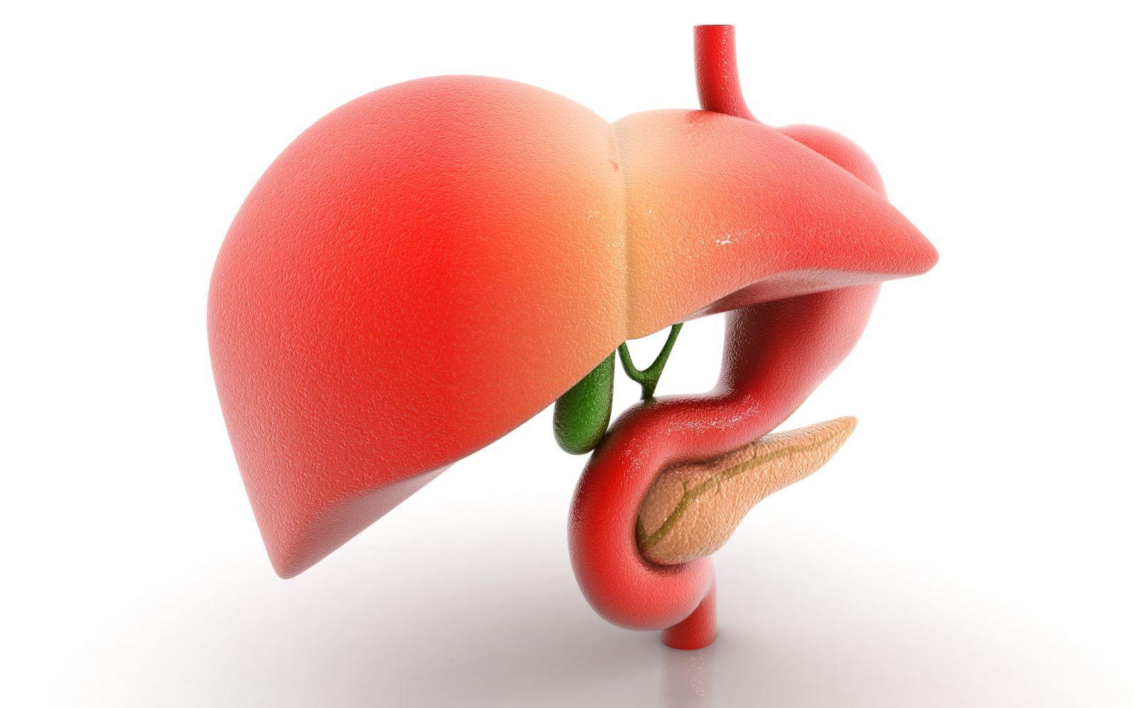 Токсические  воздействия на печень, или токсические гепатиты: виды, диагностика и лечение