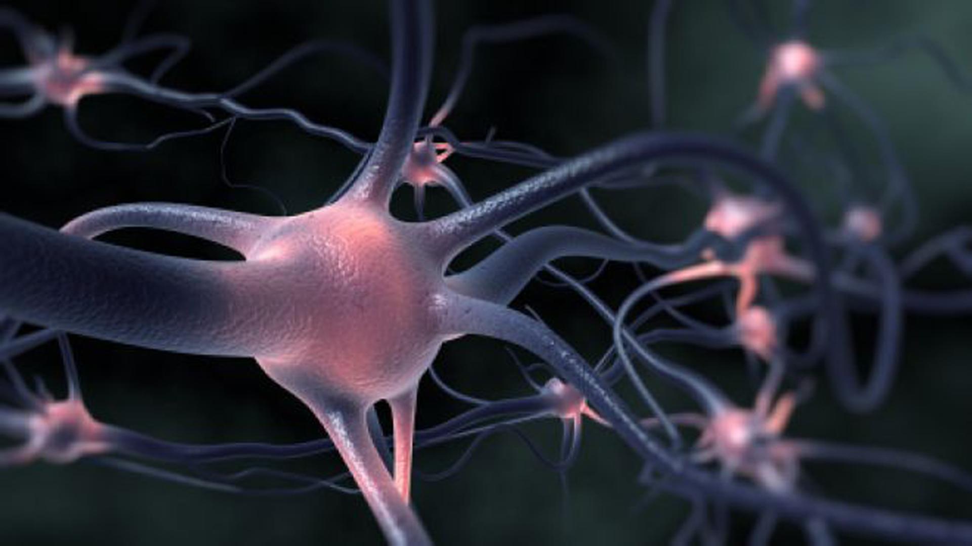 Диагностические  особенности   моторно-сенсорной  невропатии  Шарко-Мари   наследственного  генеза