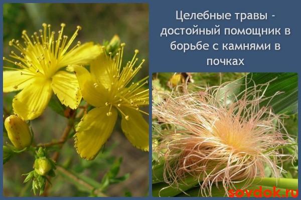 Лечебные травы против камней в почках