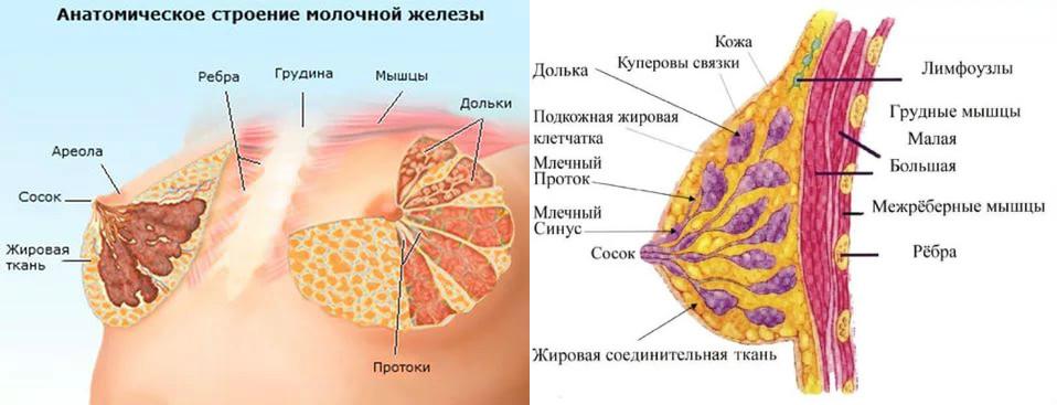 Уплотнение жировой ткани