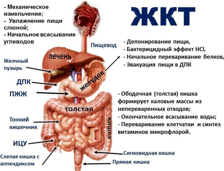 Заболевания желудочно-кишечного тракта как лечить