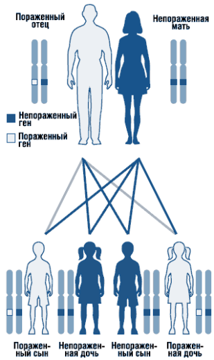 Аутосомно-доминантный тип наследования (схема)