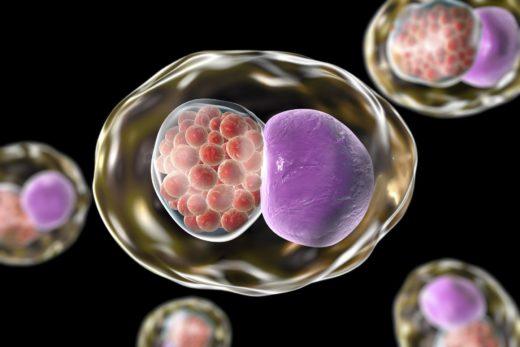 Бактерии внутри клетки