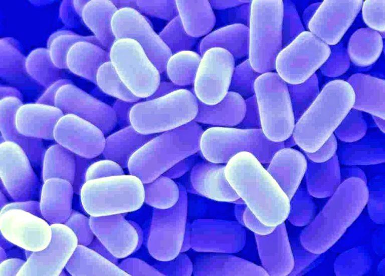 лактобактерии влагалища
