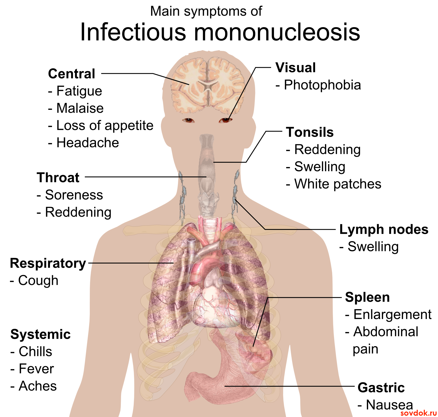 Анализ крови лимфогранулематоз 1 фотография