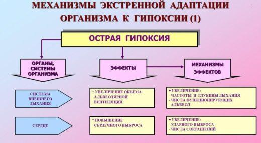 Механизмы экстренной адаптации организма к гипоксии