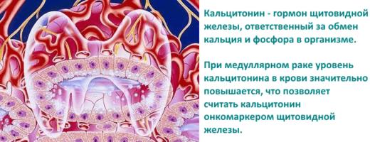 Гормон щитовидной железы — кальцитонин
