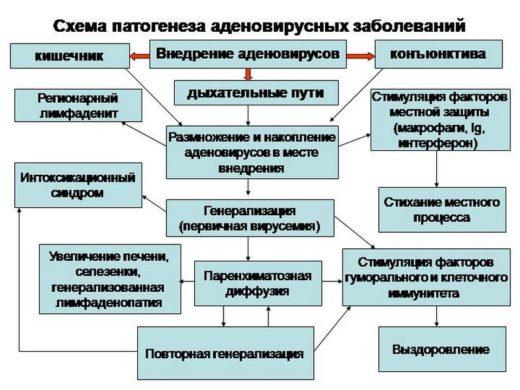 Схематическое изображение внедрения аденовирусови влияние на организм