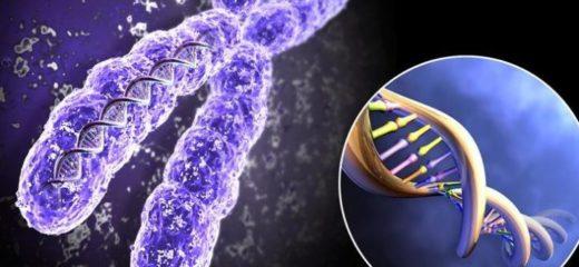 Хромосомы и ДНК человека