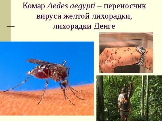 Комар жёлтолихорадочный и туристы в лесу