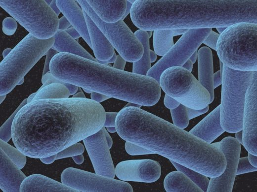 Бактерия Листериа Моноцитогенис