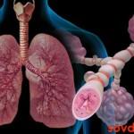 Бронхиальная  астма   и  сопутствующая  ей    патология   сердца