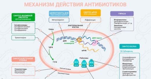 Механизм действия антибиотиков (схема)