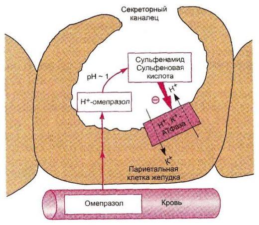 Механизм действия препарата Омез
