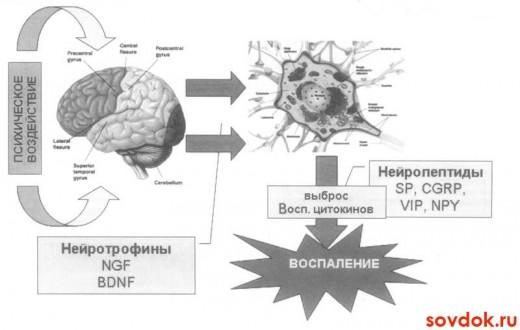 механизм появления психосоматического заболевания