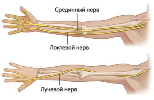Нервы предплечья (схема)