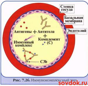образование антител