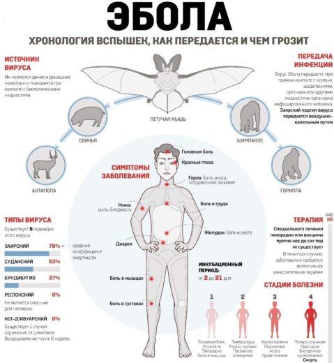 Основные аспекты лихорадки Эбола