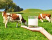 Парное молоко от больных животных - источник бруцеллёза