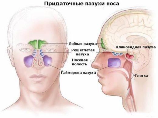 Схема расположения придаточных пазух носа