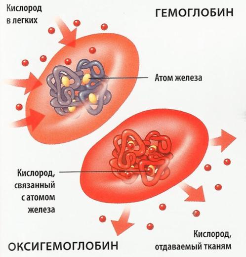 Перенос кислорода гемоглобином (схема)