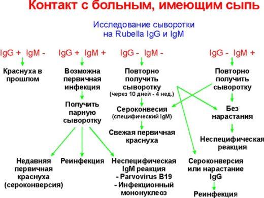 Схема расшифровки иммуноферментного анализа на антитела к краснухе