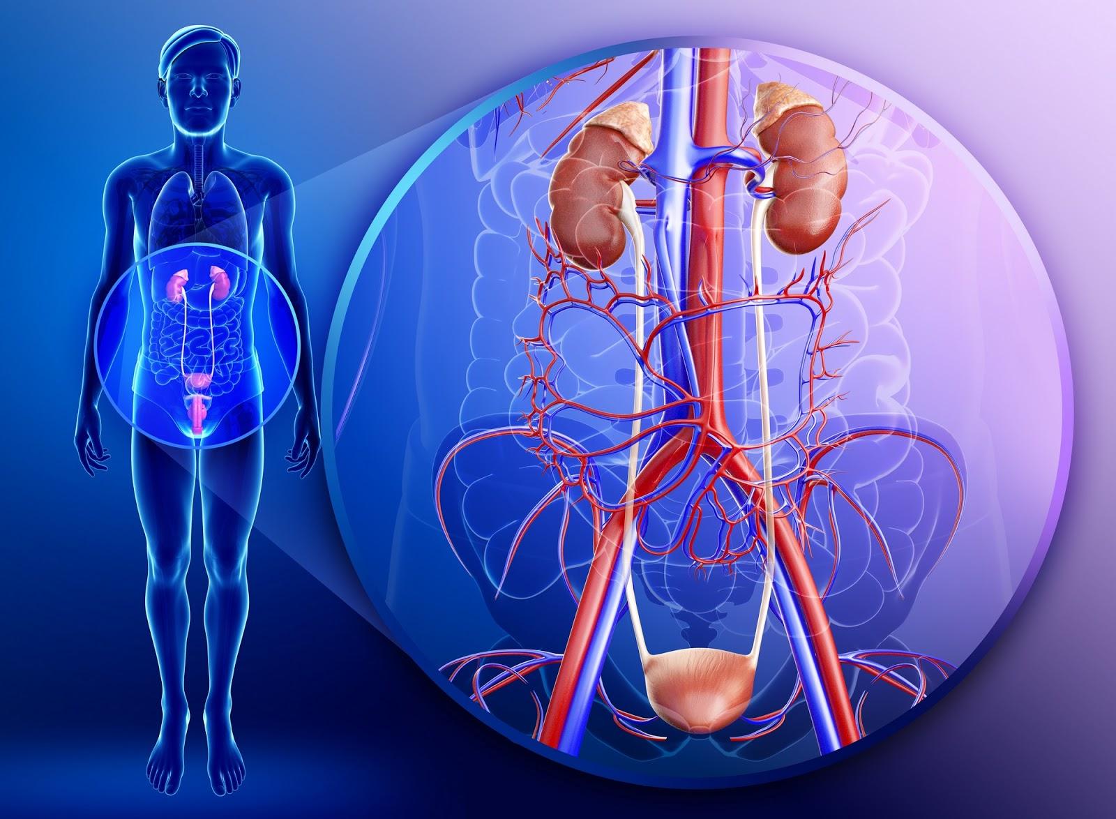 Хронический пиелонефрит: как не ошибиться в диагнозе