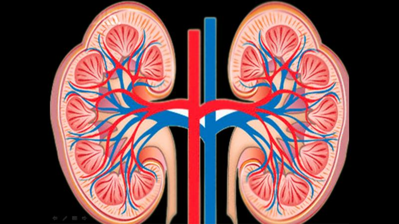 Пиелонефрит: истоки и причины воспаления почек
