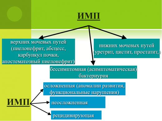 Виды инфекции мочеполовой системы (ИМП)