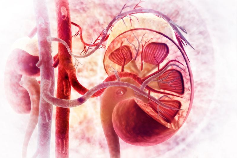 Нефрокальциноз: как справиться с недугом