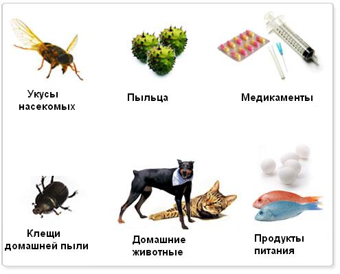 профилактика аллергии на амброзию