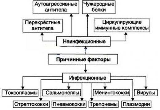 Причины гломерулонефрита: блок-схема