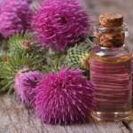 Эффективно ли репейное масло против перхоти и как его применять?