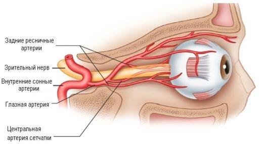Схема кровоснабжения глазного яблока